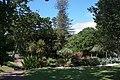 Auckland Domain, detail 2016-01-21-7.jpg