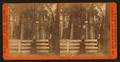 Auld Reckie, Mammoth Grove, Calaveras Co., Cal, by Watkins, Carleton E., 1829-1916.png
