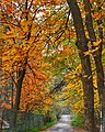 Autumn leaves on the way to Pari Mahal ,Srinagar ,Kashmir - panoramio.jpg