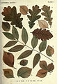Autumnal leaves (Plate I) (6796241067).jpg