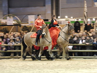 Auxois - In ridden competition at the 2011 Salon International de l'Agriculture