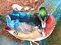 Aves exóticas - panoramio (4).jpg
