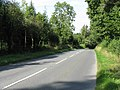 B4203 In The Forestry Land - geograph.org.uk - 1482369.jpg
