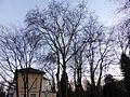 Bahnhof Belvedere Naturdenkmal Platanengruppe.jpg