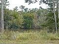 Bainbridge Flint River view Oct 4 2020.jpg