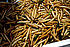 Bamboo worms food.jpg