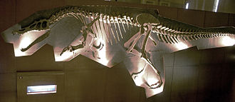 Baryonyx - Reconstruction of the holotype skeleton, Natural History Museum, London
