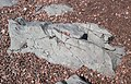 Basalt lava flow (North Shore Volcanic Group, Mesoproterozoic, ~1.1 Ga; Leif Ericson Park, Duluth, Minnesota, USA) 3 (22414818916).jpg
