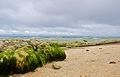 Basdako Beach Moalboal.jpg