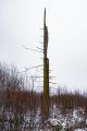 Baum Mecklenbruch LauraHoeppner.png