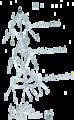 Baumdiagramm für ein Duell.png