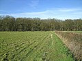 Beachet Wood from footpath near Crumps Farm - geograph.org.uk - 361395.jpg