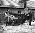 Bearskin, ladder, attic Fortepan 89629.jpg