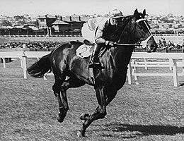 Beau Vite 1940 MVRC WS Cox Plate Jockey Ted McMenamin Entrenador Frank McGrath.jpg