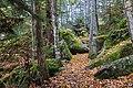 Beech Mountain trails (b50c784e-c064-419a-9a21-05c2e8099813).jpg
