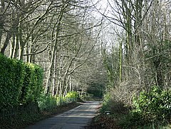 Beech Road, Box Hill - geograph.org.uk - 703538.jpg