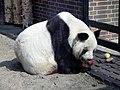 Berlin panda 2.jpg