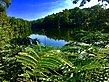 Beyond the Ferns behold a vast, & most amazing Lake.jpg