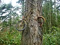 Bike in Tree - panoramio.jpg