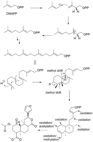 Salvinorin A - Biosynthesis of Salvinorin A