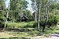 Birch - panoramio (7).jpg