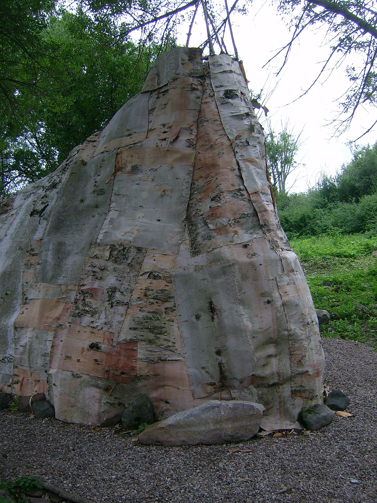 Birch Bark Wikipedia