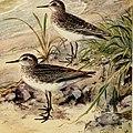 Bird lore (1911) (14732273696).jpg