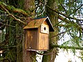Birdhouse in thuja tree.jpg