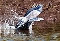Birds (17544722158).jpg