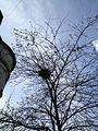 Birds nest (7530070838).jpg