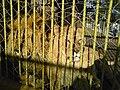 Bitola Zoo Lions 2.JPG