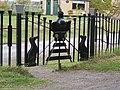 Black Dog Halt - geograph.org.uk - 283083.jpg