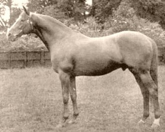 Blue Peter (British horse) - Image: Blue Peter (GB)