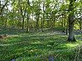 Bluebell Woods (1).jpg