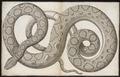 Boa murinus - 1700-1880 - Print - Iconographia Zoologica - Special Collections University of Amsterdam - UBA01 IZ11900045.tif