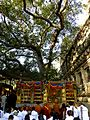 Bodhi Tree Maha Bodhi Temple Bodh Gaya India - panoramio.jpg