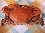 Boiled shore swimming crab.jpg