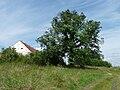 Borovnice (ČB) - památný strom.jpg