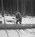 Bosbewerking, arbeiders, boomstammen, Bestanddeelnr 251-7097.jpg