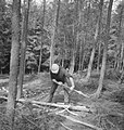 Bosbewerking, arbeiders, boomstammen, bomen vellen, Bestanddeelnr 253-5526.jpg