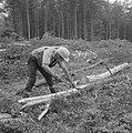 Bosbewerking, arbeiders, boomstammen, gereedschappen, Bestanddeelnr 253-5207.jpg