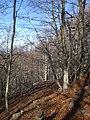 Bosc de Faigs, Parc Natural del Montseny (desembre 2011) - panoramio (1).jpg