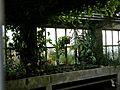 Botanični vrt (3990165861).jpg