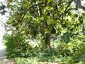 BotanicGardensPisa (131).JPG