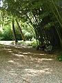 BotanicGardensPisa (72).JPG