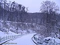 Botanic Garden in winter - panoramio - eugeneloza (4).jpg
