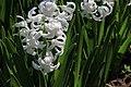 Botanic garden - Cluj-Napoca (4543597125).jpg