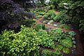 Botanische Tuin Afrikaanderwijk.jpg
