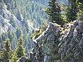 Bouquetin à la Roche Parnal - panoramio.jpg