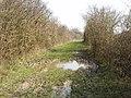Bridleway across Otmoor - geograph.org.uk - 386644.jpg